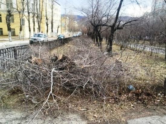Власти Читы после резонанса остановят вырубку аллеи и обрезку деревьев