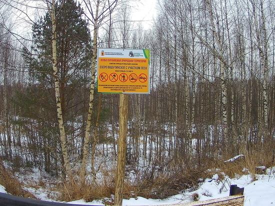 В ярославском заповеднике нашли незаконную дорогу