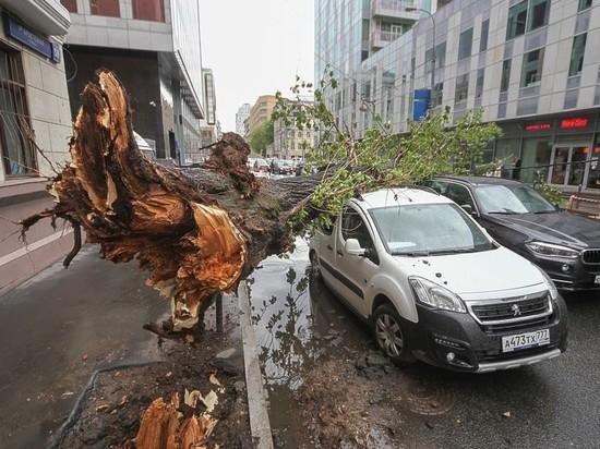Пресс-служба комплекса городского хозяйства Москвы обнародовала сообщение в своем официальномTelegram-канале, в котором говорится о последствиях ураганного ветра в столице