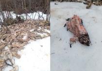 Жуткое зрелище: на обочину дороги в Карелии выгрузили мертвую форель