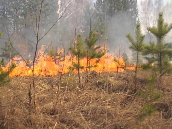 В Курганской области сохраняется высокая пожарная опасность