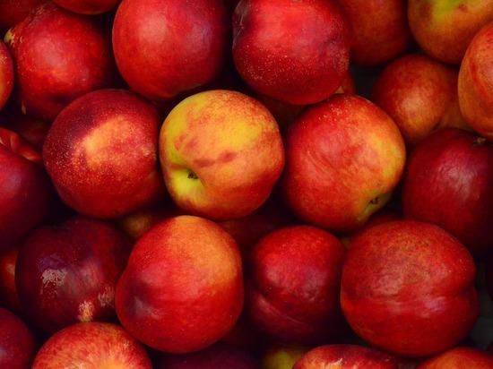 В завезенных из Казахстана в Алтайский край яблоках обнаружили калифорнийскую щитовку