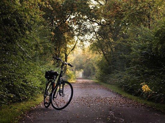 В Кирове планируют обустроить велодорожки