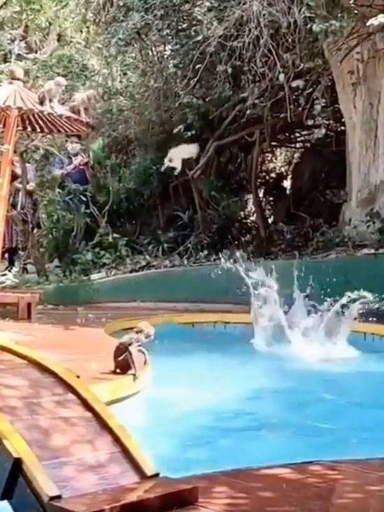 В Индии обезьяны начали отдыхать на курортах вместо людей