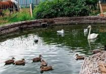 В Ивановском зоопарке возобновились экскурсии