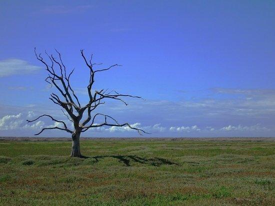 Дипломаты РФ и Китая отметили 20-летие договора о дружбе посадкой дерева