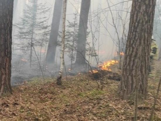 В Свердловской области сохраняется высокая пожарная опасность