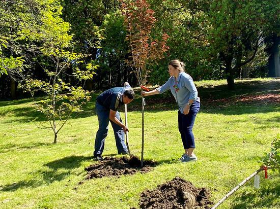 В Сочи сажают деревья в рамках акции «Сад памяти»