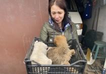 Волонтер из Петрозаводска пытается сохранить жизнь щенкам, которые могли погибнуть