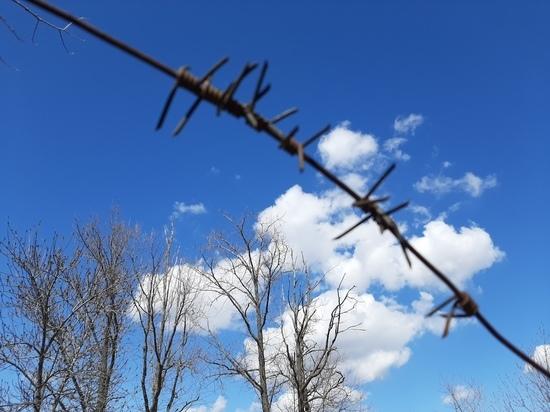 Осуждённых на воле в Саратовской области почти в полтора раза больше, чем за решёткой