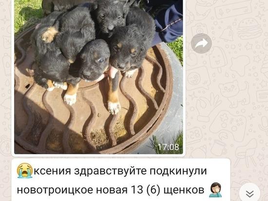 Сахалинские зоозащитники вернули нерадивой собачнице выброшенных щенков