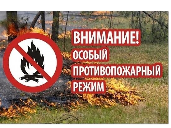 Ни в лес, ни по дрова: в Ярославской области введен особый пожароопасный режим.
