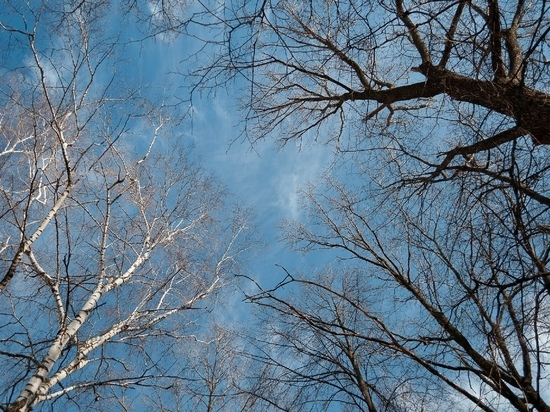10 мая в Рязанской области ожидается до + 18 градусов