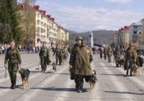 В память о подвиге военных собак была организована акция «Лохматые герои», режиссером которой стала жительница Междуреченска Наталья Немыкина
