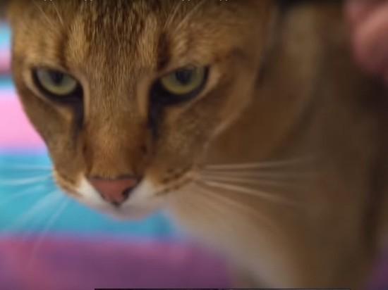 Составлен ТОП самых опасных домашних кошек