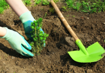 22 мая в Иркутске пройдёт акция по посадке деревьев