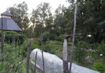 «МК в Хабаровске» рассказывает об основных дачных вредителях, встречающихся в наших широтах