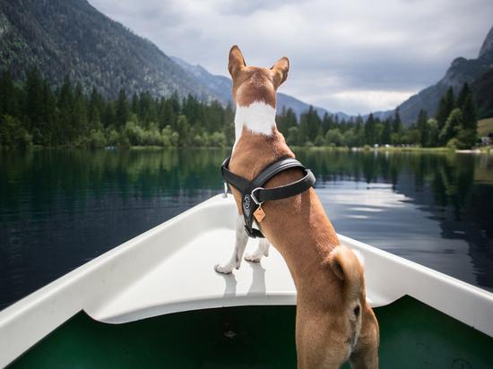 Названы девять самых здоровых пород собак