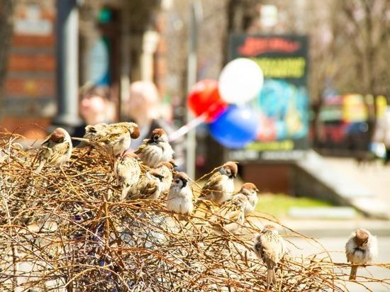 В День города 2021 в Хабаровске перекроют центр, устроят игры орков и съедят кумкваты для Снегурочки