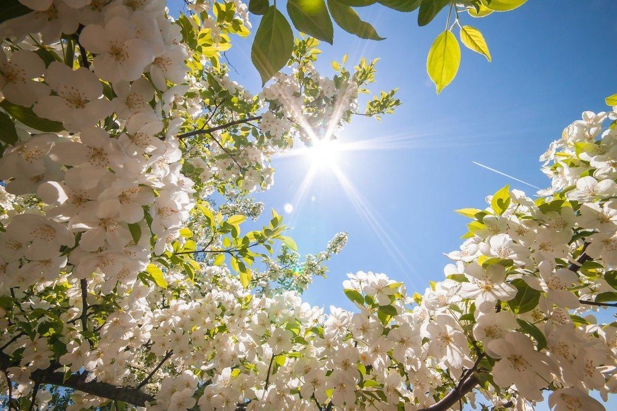 С сегодняшнего дня в Костроме начнется лето