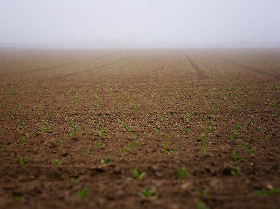 На весенне-полевые работы в Татарстане выделили 3,5 млрд. субсидий