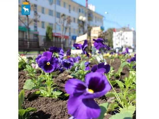 Бульвар Йошкар-Олы украсился цветами