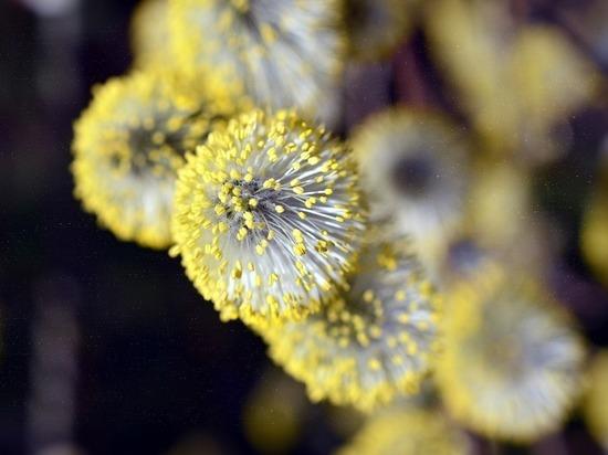 Сезон цветения и аллергии. Как уберечь себя?
