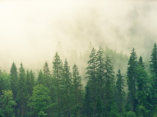 В лесах Кировской области ожидается повышенная пожарная опасность