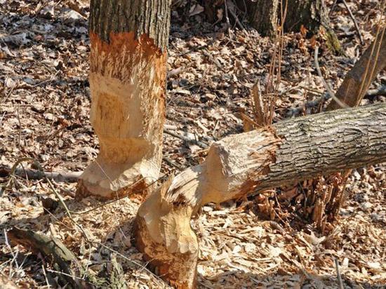 С лесами в Астраханской области беда