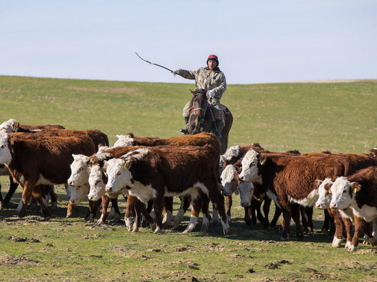 Нехватка пастбищ и скотокрадство – проблемы современного Казахстана