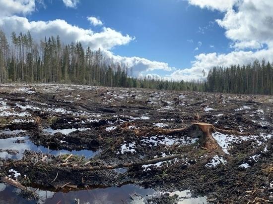 В нынешней ужасной ситуации, складывающейся с вырицкими лесами, поневоле приходит мысль о каком-то бесчеловечном и тщательно продуманном плане уничтожения