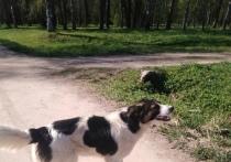 Собаке, которую привязали к дереву в Оленинском округе, ищут хозяина