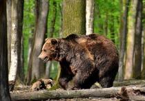 В Томской области в лесу нашли растерзанное тело мужчины: погибший планировал начать рубку леса