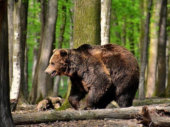 Мужчина планировал начать рубку леса