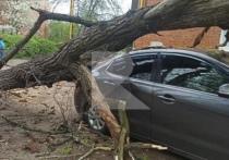 На улице Братиславской в Рязани на машину упало дерево