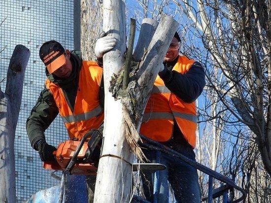 Власти Кемерова потратят около 250 тысяч рублей на рубку деревьев в центре города