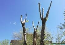 Власти Читы заявили, что не могут полностью остановить вырубку деревьев