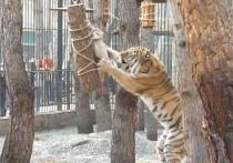 В Омской области Большереченский зоопарк заставит своих хищников потрудиться