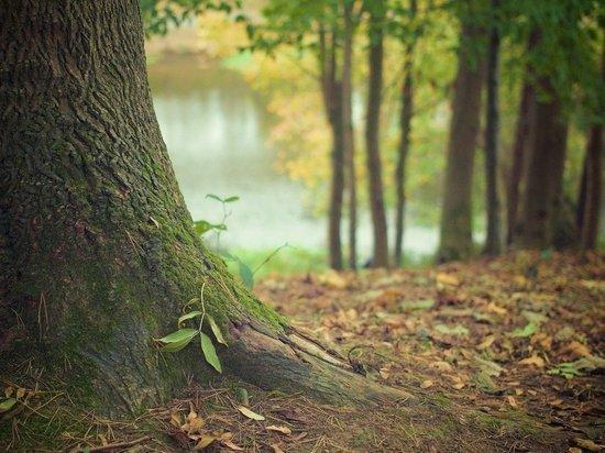 В Красноярском крае незаконно вырубили лес на 110 млн