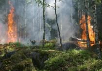 Пять палов травы произошли в Псковской области за сутки