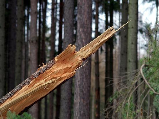 Ветер повалил в Москве почти 70 деревьев