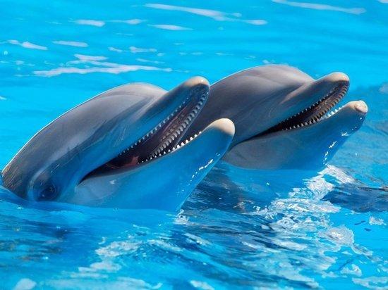 В России могут запретить вылов китов и дельфинов