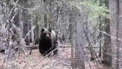 Пес прогнал гуляющего близ села Ямала бурого медведя