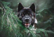 Житель ДНР заплатит штраф за непривязанных собак