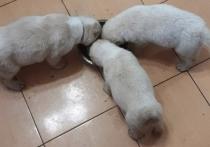 В Волгограде по горячим следам задержали похитителя трех щенят
