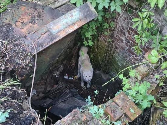 Собака просидела в колодце в Армавире три дня