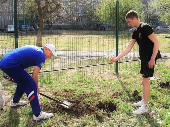 Екатеринбуржцы смогут принять участие в озеленении своих дворов