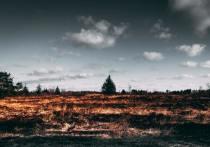 Два лесных пожара зафиксировали в Псковской области за сутки