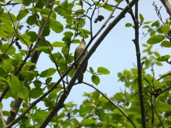В Калужскую область прилетели последние перелетные птицы