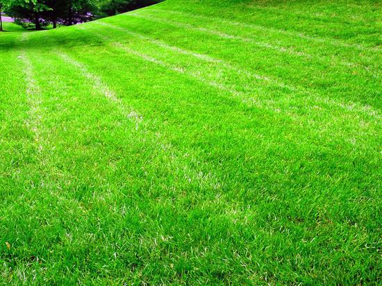 Газонная трава в ассортименте Интернет магазина «Мировой-газон»
